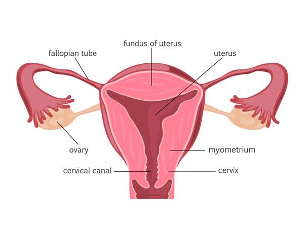 unexplained-infertility-img1-delhi-ivf